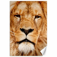 Africa African Animal Cat Close Up Canvas 20  X 30
