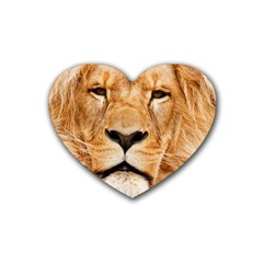 Africa African Animal Cat Close Up Heart Coaster (4 Pack)