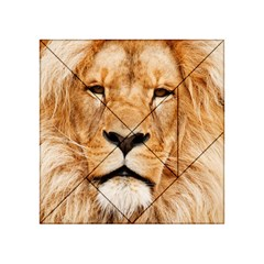 Africa African Animal Cat Close Up Acrylic Tangram Puzzle (4  X 4 )