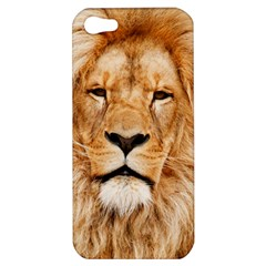Africa African Animal Cat Close Up Apple Iphone 5 Hardshell Case by BangZart