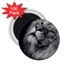 Feline Lion Tawny African Zoo 2 25  Magnets (100 Pack)  by BangZart