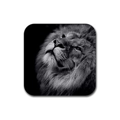 Feline Lion Tawny African Zoo Rubber Coaster (square)