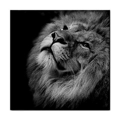 Feline Lion Tawny African Zoo Face Towel by BangZart