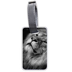 Feline Lion Tawny African Zoo Luggage Tags (two Sides)