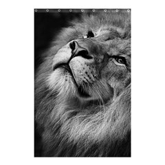 Feline Lion Tawny African Zoo Shower Curtain 48  X 72  (small)