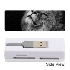 Feline Lion Tawny African Zoo Memory Card Reader (stick)