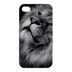 Feline Lion Tawny African Zoo Apple Iphone 4/4s Hardshell Case