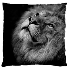 Feline Lion Tawny African Zoo Large Flano Cushion Case (two Sides)