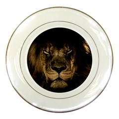 African Lion Mane Close Eyes Porcelain Plates by BangZart