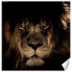 African Lion Mane Close Eyes Canvas 12  X 12
