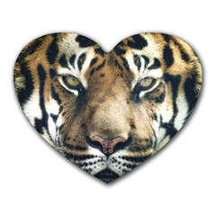 Tiger Bengal Stripes Eyes Close Heart Mousepads