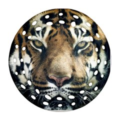 Tiger Bengal Stripes Eyes Close Round Filigree Ornament (two Sides)