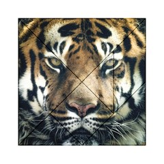 Tiger Bengal Stripes Eyes Close Acrylic Tangram Puzzle (6  X 6 )