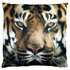 Tiger Bengal Stripes Eyes Close Large Cushion Case (two Sides)
