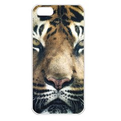 Tiger Bengal Stripes Eyes Close Apple Iphone 5 Seamless Case (white)