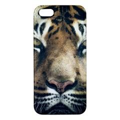 Tiger Bengal Stripes Eyes Close Apple Iphone 5 Premium Hardshell Case