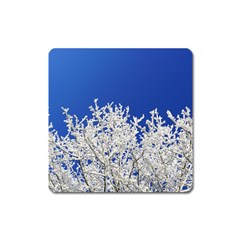 Crown Aesthetic Branches Hoarfrost Square Magnet