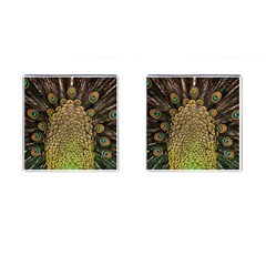 Peacock Feathers Wheel Plumage Cufflinks (square)