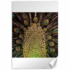 Peacock Feathers Wheel Plumage Canvas 12  X 18   by BangZart