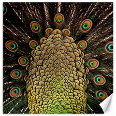 Peacock Feathers Wheel Plumage Canvas 16  X 16