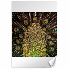 Peacock Feathers Wheel Plumage Canvas 20  X 30