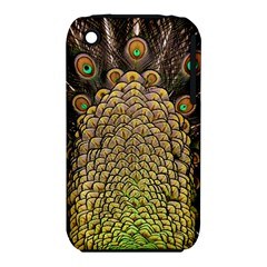 Peacock Feathers Wheel Plumage Iphone 3s/3gs by BangZart
