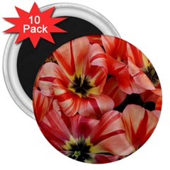 Tulips Flowers Spring 3  Magnets (10 Pack)