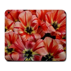 Tulips Flowers Spring Large Mousepads
