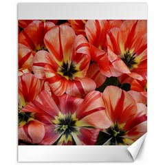 Tulips Flowers Spring Canvas 11  X 14