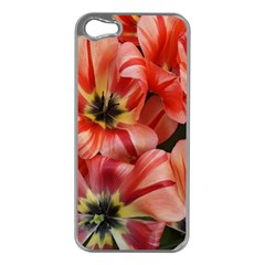 Tulips Flowers Spring Apple Iphone 5 Case (silver)