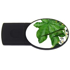 Plant Berry Leaves Green Flower Usb Flash Drive Oval (2 Gb)