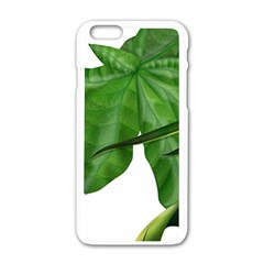 Plant Berry Leaves Green Flower Apple Iphone 6/6s White Enamel Case by BangZart