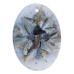 Winter Frost Ice Sheet Leaves Ornament (oval) by BangZart