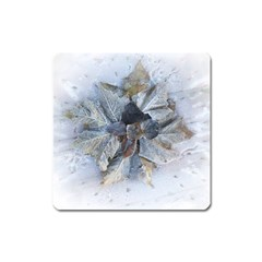 Winter Frost Ice Sheet Leaves Square Magnet