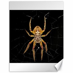 Nsect Macro Spider Colombia Canvas 18  X 24   by Celenk