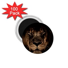 African Lion Mane Close Eyes 1 75  Magnets (100 Pack)  by Celenk