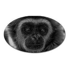 Gibbon Wildlife Indonesia Mammal Oval Magnet by Celenk