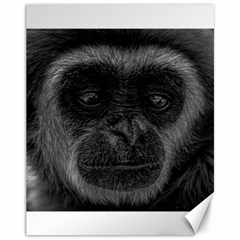 Gibbon Wildlife Indonesia Mammal Canvas 11  X 14   by Celenk