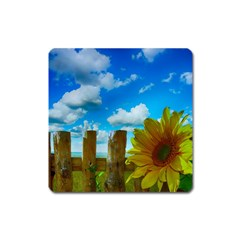 Sunflower Summer Sunny Nature Square Magnet by Celenk