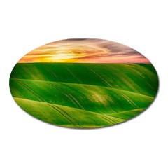Hills Countryside Sky Rural Oval Magnet