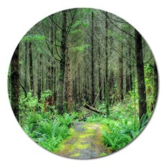 Forest Woods Nature Landscape Tree Magnet 5  (round) by Celenk