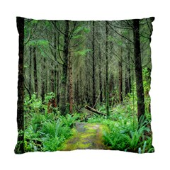Forest Woods Nature Landscape Tree Standard Cushion Case (two Sides) by Celenk