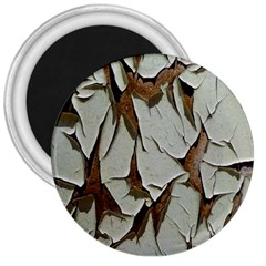 Dry Nature Pattern Background 3  Magnets