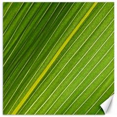 Leaf Plant Nature Pattern Canvas 12  X 12