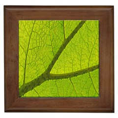 Green Leaf Plant Nature Structure Framed Tiles by Nexatart