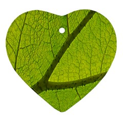 Green Leaf Plant Nature Structure Ornament (heart)