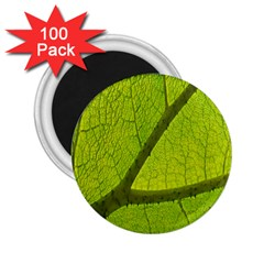 Green Leaf Plant Nature Structure 2 25  Magnets (100 Pack)