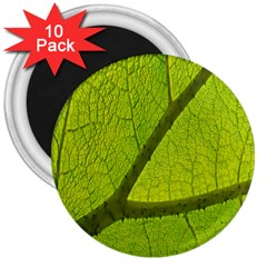 Green Leaf Plant Nature Structure 3  Magnets (10 Pack)