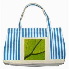 Green Leaf Plant Nature Structure Striped Blue Tote Bag