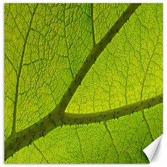Green Leaf Plant Nature Structure Canvas 20  X 20